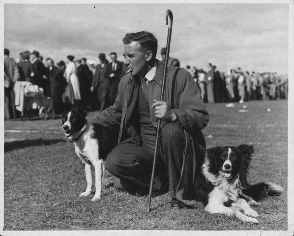 border collie geschiedenis als sport herder