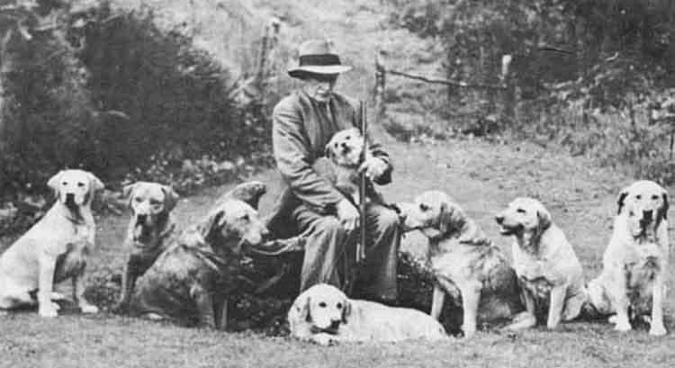 Geschiedenis labrador
