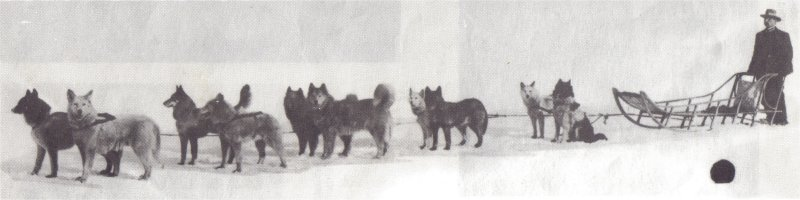 Geschiedenisch Syberische Husky hond